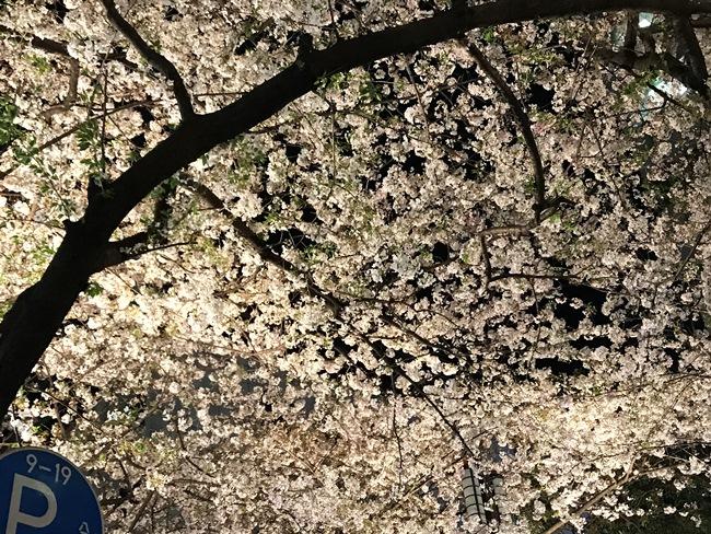 これは失敗例。大きな桜の木に満開に咲いた桜を、いっぱいにおさめていますが、これではのっぺりとした印象になってしまいます