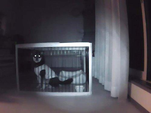 「夜間、ケージに入っているみくの様子。電気を消した状態でも映像はクッキリです!」