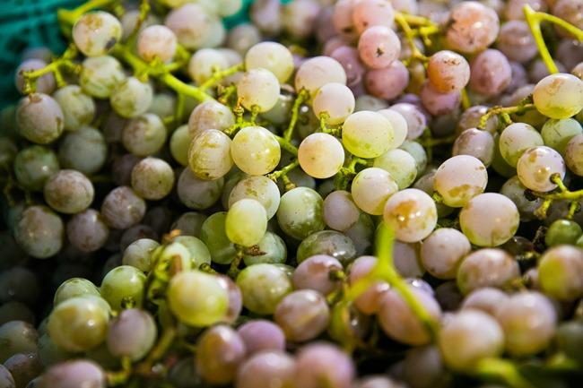 山梨から届いたばかりの瑞々しいブドウ「甲州」
