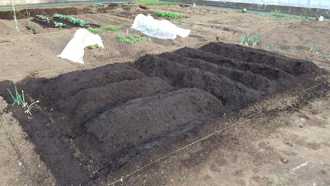 しっかりと耕し、水はけしやすいよう高く畝を作る