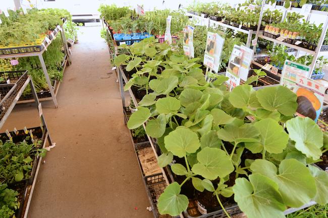 ホームセンターなどには植え付け適期の野菜苗がズラリと並ぶ。植えて見たいもの、育てみたいものを探してみましょう。(撮影協力/農産物直売所 なのはな)
