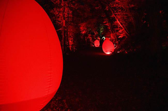 『呼応する、たちつづけるものたちと森』森のなかへ入って行くと、後ろから光の波が追いかけてきたり、逆に前方から光の波が押し寄せてきたりして目が離せない。また、光る物体と呼応して、森の木々も同じ色の光を発する。