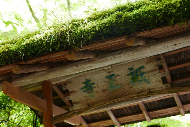 祇王寺の扁額(寺の木製看板)を掲げる門の茅葺き屋根にはじまり、目を移せばあちこちで苔むしている。