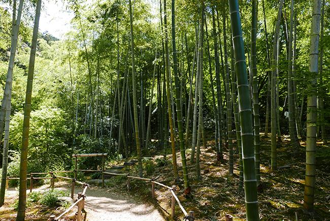 竹林にも苔むしているのは、常寂光寺の庭の特徴。