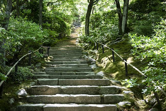 石段の左右にも、鮮やかな緑の絨毯が広がる。
