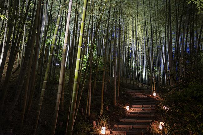 茶室まで続く竹林。