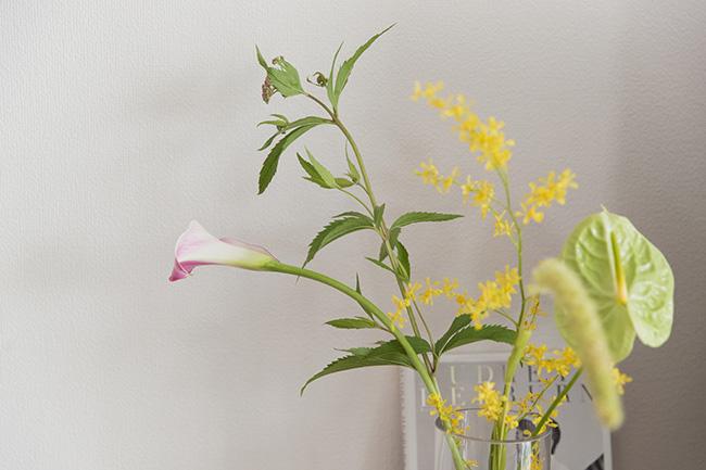 水彩画みたいな淡い色の可愛いお花が好き。