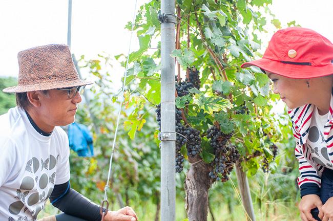 夫婦二人三脚、とはいえ「今年のような厳しい年は、畑で健全なブドウだけを収穫するのには、人手と丁寧な仕事が必要。とてもわたしたちふたりではできないので、ありがたいことです」と中村夫妻。
