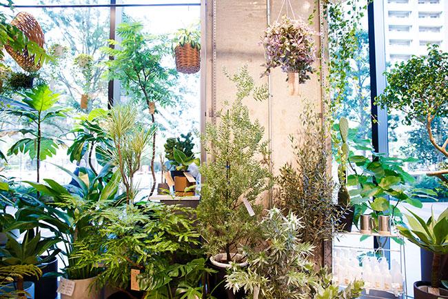1階では、植物や花の販売も行われている。