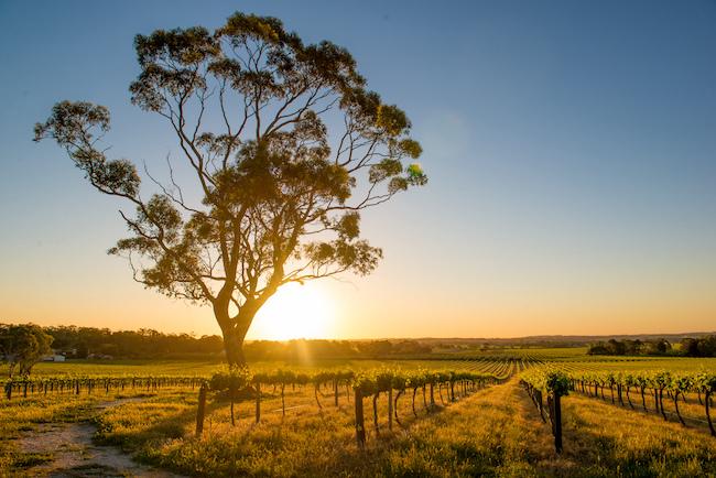 20210415_atLiving_wine-Australia_001-2