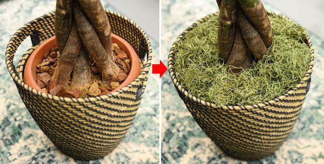 「鉢よりも高さのあるカバーを選ぶのがポイント。植物の根本をフラワーショップなどで売っているマルチング材で隠すとより見栄えがします」(遠藤さん)