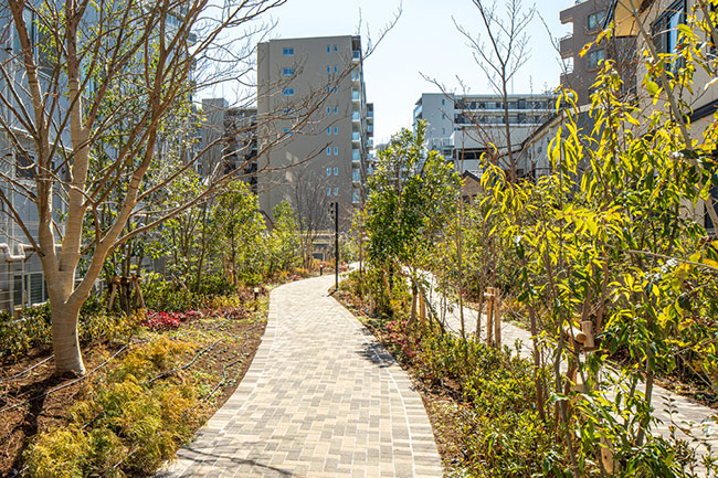 敷地内に設けられた緑道は、居住者に限らず誰でも通行できます。休日の朝にはウォーキングやランニング、ペットの散歩などを楽しむ人々の姿が。