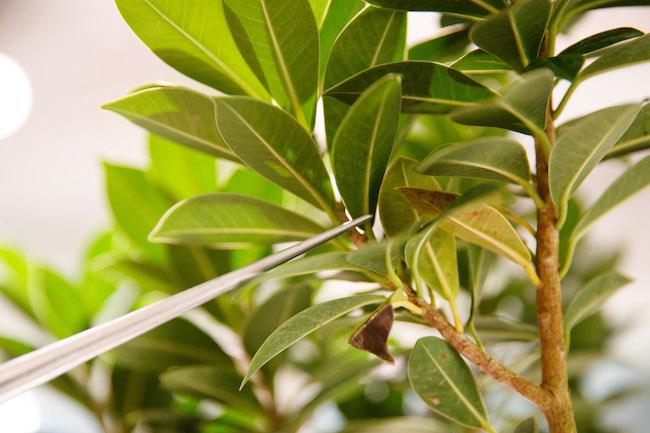 葉が密集しているところはとくに害虫がつきやすいのだとか。